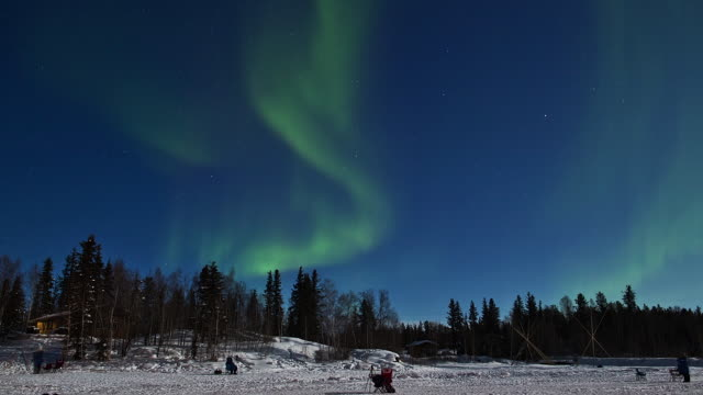 WS T/L View of Aurora above snow covering forest / Yellowknife, Northwest Territories, Canada