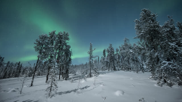 MS PAN T/L View of aurora with frost covered trees / Yellowknife, Northwest Territories, Canada