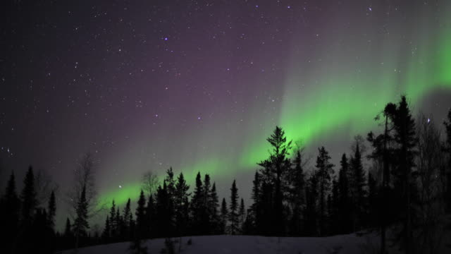 WS T/L View of aurora with silhouette of trees near Prelude Lake / Yellowknife, Northwest Territories, Canada