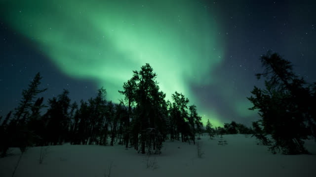 MS PAN T/L View of aurora with trees in foreground / Yellowknife, Northwest Territories, Canada