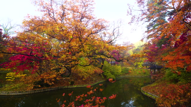 view of autumn maple trees in back yard of gwallamji pond in changdeok palace (unesco world heritage site in seoul) at day - standing water yard stock videos & royalty-free footage