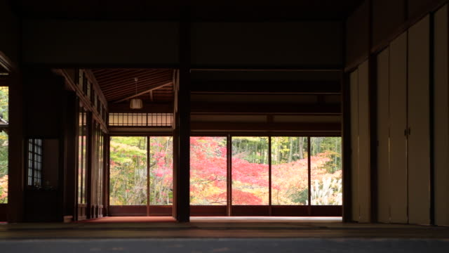 view of autumn trees outside temple room in kyoto, low angle - temple building stock videos & royalty-free footage