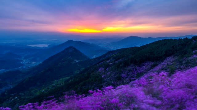 view of azalea in cheonjusan mountain (famous tourist attractions) at sunset - heidekraut stock-videos und b-roll-filmmaterial