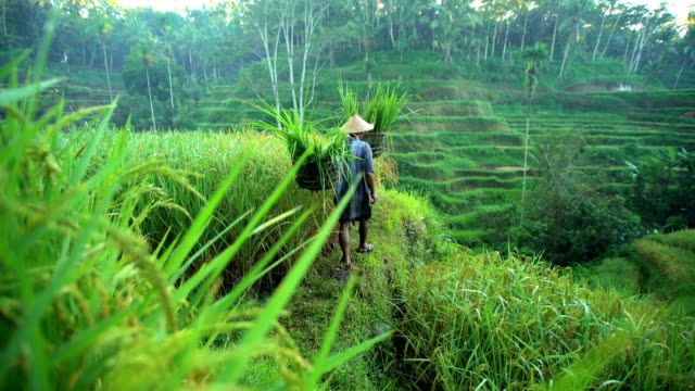 view of bali rice farmer working on hillside - east stock videos & royalty-free footage