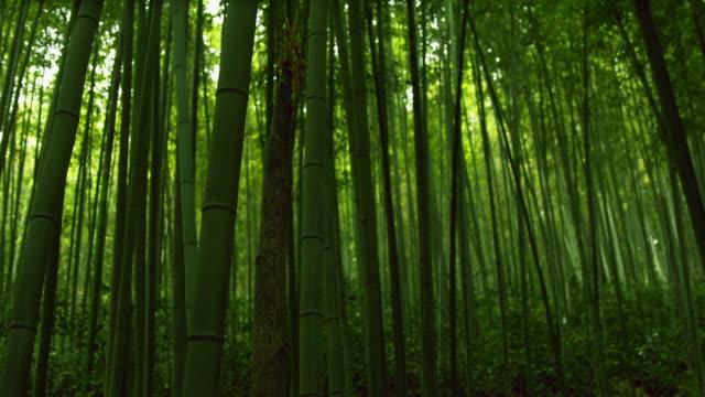 view of bamboo grove at juknokwon(bamboo garden) - bamboo plant点の映像素材/bロール