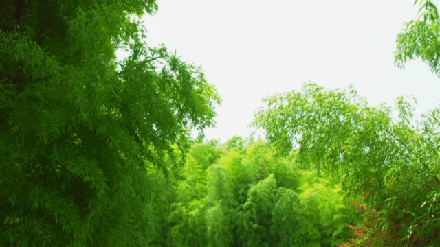 view of bamboo grove near jeongsonggangyujeok(jeollanam-do monument 1) at juknokwon(bamboo garden) - damyang stock videos & royalty-free footage