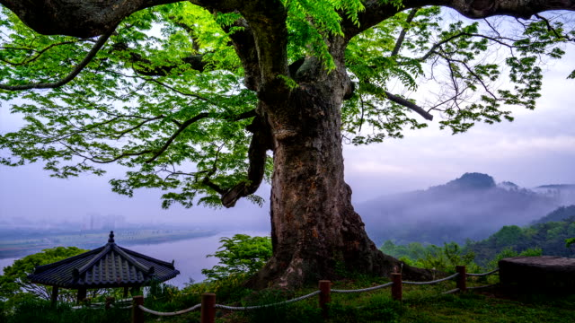View of BanguJung house (Gyeonggi-do Cultural Assets Data 12) and an old tree in Hamangun
