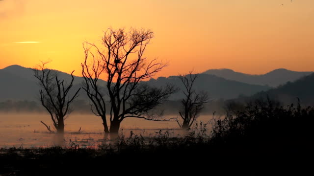 stockvideo's en b-roll-footage met view of bare tree in junamjeosuji reservoir at sunrise - bare tree