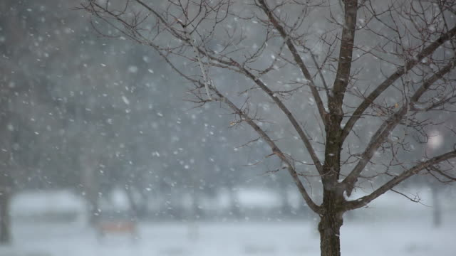 ms view of bare  tree with snow fall / kitchener, ontario, canada - peter snow stock videos & royalty-free footage