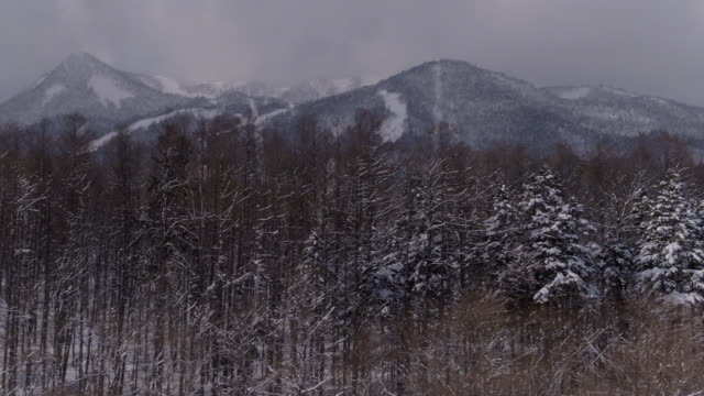 View of bare trees and snow-covered mountains in Daisetsu national park, Hokkaido, Japan