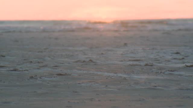 ms view of beach at evening / st. peter-ording, schleswig holstein, germany   - schleswig holstein stock-videos und b-roll-filmmaterial