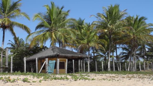 ws view of beach hut with palm trees / trancoso, bahia, brazil - ヤシ点の映像素材/bロール