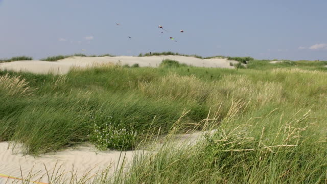 WS View of beach kites flying in dune landscape, North Sea North Frisia, / St. Peter Ording, Schleswig Holstein, Germany