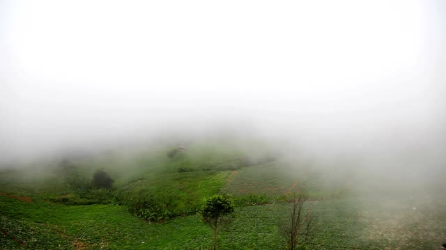 view of beautiful fog at phu tub berk in thailand - area selvatica video stock e b–roll