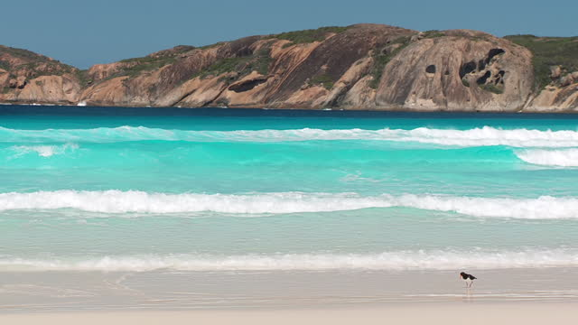 WS PAN View of bird at lucky bay with mountains in background / Esperance, Western Australia, Australia