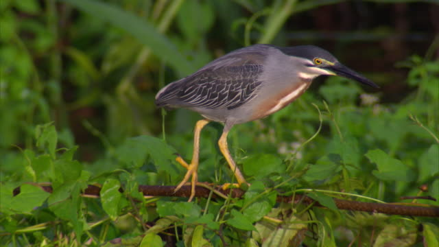 view of bird hunting for small fish in river - bird hunting stock videos & royalty-free footage