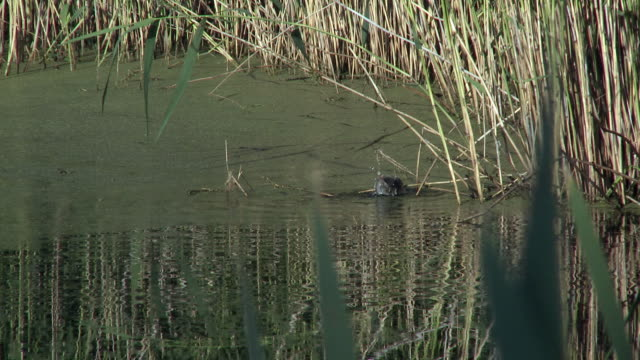 MS View of bird in pond / Denmark