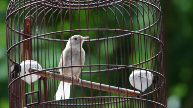 MS View of  Bird in wooden cage / Hong Kong, China