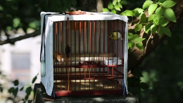 vídeos y material grabado en eventos de stock de view of bird in wooden cage,hangzhou,china - atrapar
