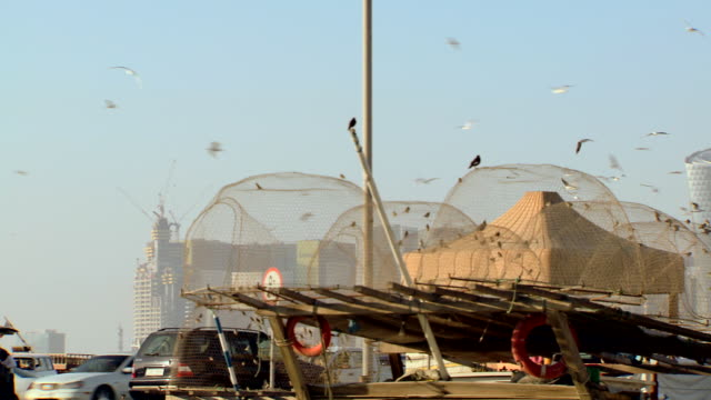 ws pan view of birds flying and congregating around metal mesh in port area with city skyline / doha, qatar - reifenschlauch stock-videos und b-roll-filmmaterial