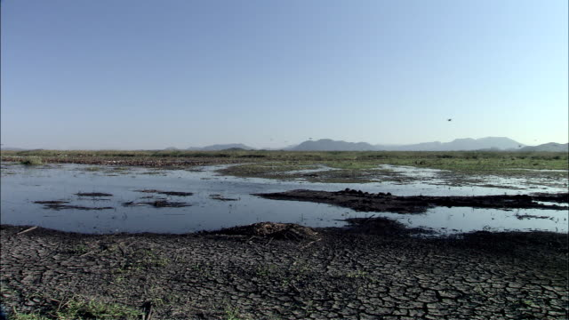 WS View of birds flying in drought wetlands   / Guanacaste, Costa Rica