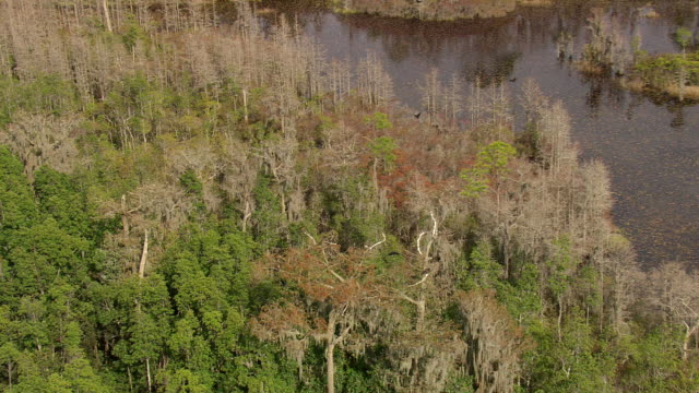 ws aerial view of birds flying over okefenokee swamp / georgia, united states - ジョージア州点の映像素材/bロール