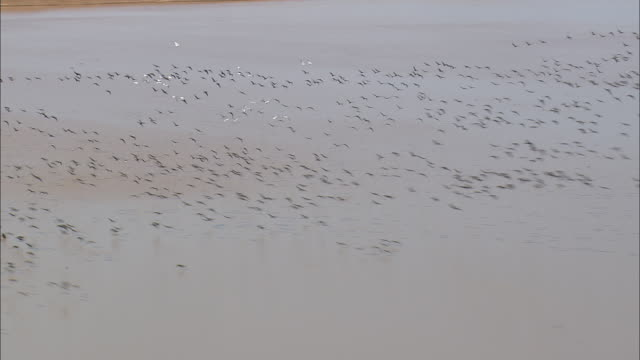 WS AERIAL View of birds flying over water / Texas, United States