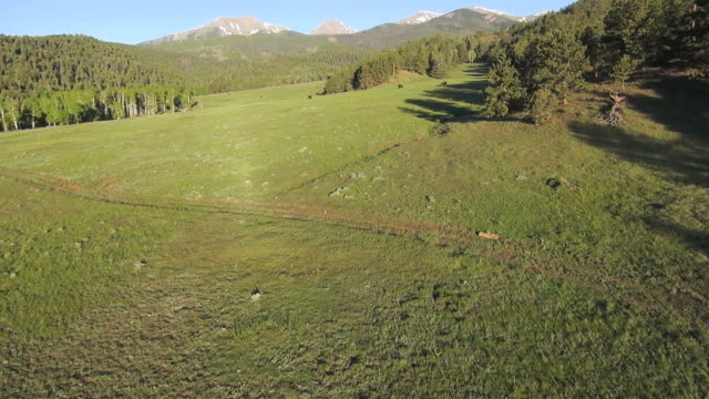 ws aerial view of bison in open grass / westclife, colorado, united states - gebirge stock-videos und b-roll-filmmaterial