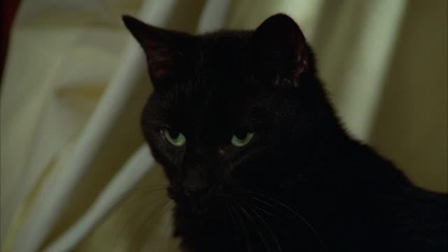 cu view of black cat sitting on small table - 黒猫点の映像素材/bロール