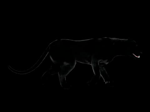 CGI POV PAN CU View of black panther running against black background