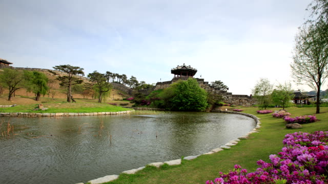 view of blooming azalea at banghwasuryujung(korea treasure 1709) - heidekraut stock-videos und b-roll-filmmaterial