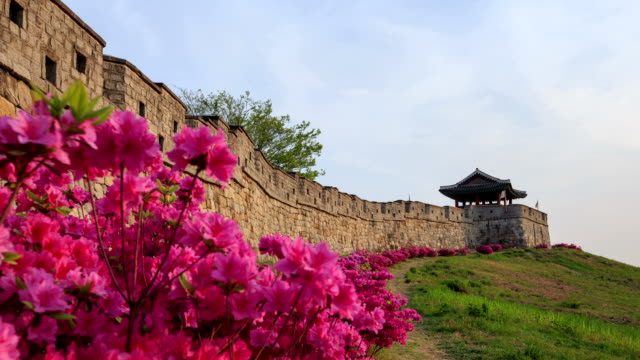 view of blooming azalea at seobukgakru fortified wall in the suwon hwaseong (unesco heritage site) - suwon stock videos and b-roll footage