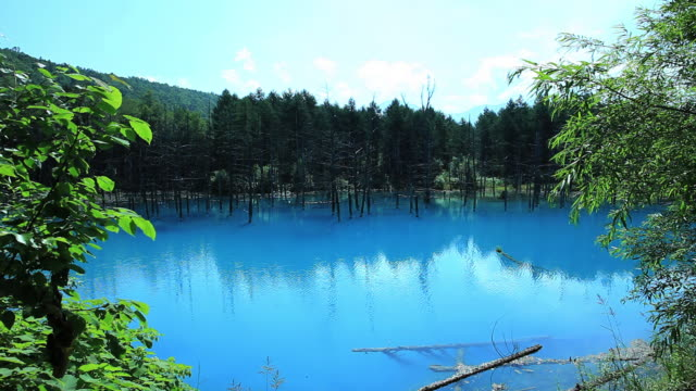 WS View of blue pond in beautiful forest  / Furano, Hokkaido, Japan