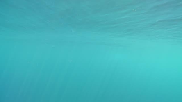 vídeos de stock, filmes e b-roll de ms view of blue whale underwater / mirissa, southern province, sri lanka   - baleia azul