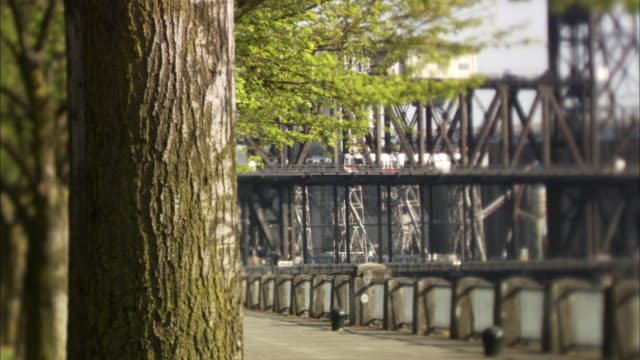 ms view of bridge with tree trunk in foreground / portland, oregon, usa - portland oregon点の映像素材/bロール