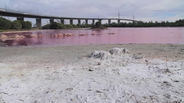 WS View of bright red algal bloom near Westgate Bridge, Yarra River / Melbourne, Victoria, Australia