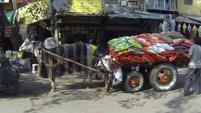 ws view of bull cart / delhi, india - arbeitstier stock-videos und b-roll-filmmaterial