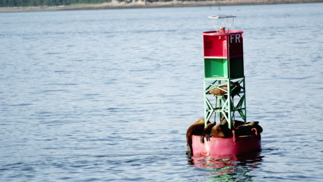 view of buoy with sea lions on it bobbing up and down - buoy stock videos and b-roll footage