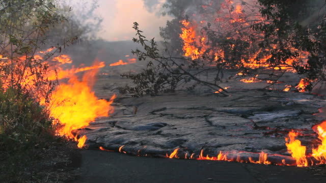vidéos et rushes de ws view of burned forest and vegetation by road with lava flow forming black smoke / kalapana, hawaii, usa - burning