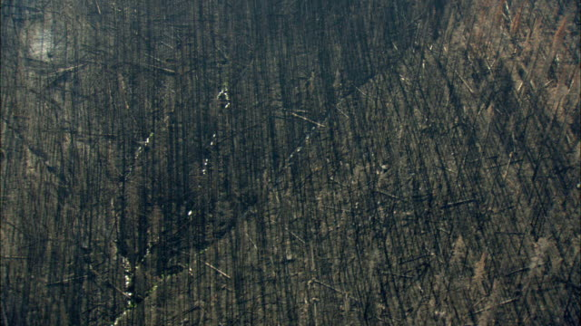 AERIAL View of burnt forest / Marion, Montana, USA