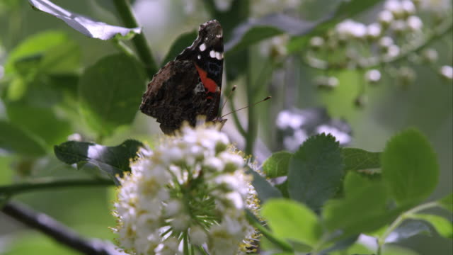 view of butterfly sitting on flower in tree. - tierfarbe stock-videos und b-roll-filmmaterial
