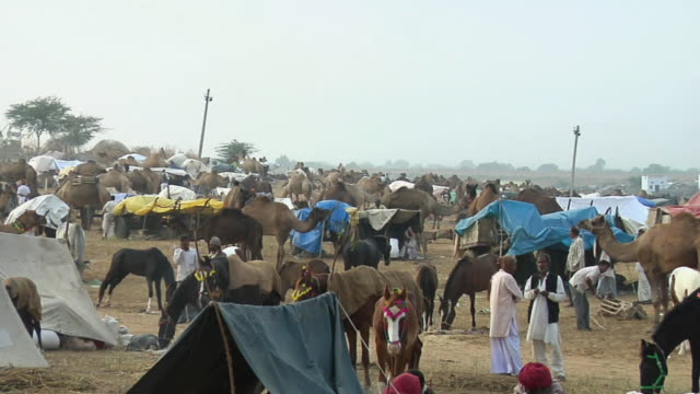 ms zo  view of  camel fair / pushkar, rajasthan, india - arbeitstier stock-videos und b-roll-filmmaterial