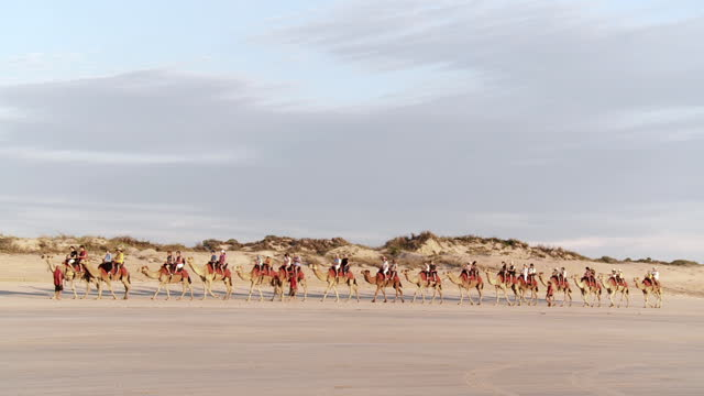 ws pan view of camel ride / broome, western australia, australia - fahrzeug fahren stock-videos und b-roll-filmmaterial