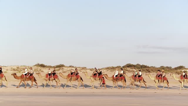 ws view of camel ride / broome, western australia, australia - camel stock videos & royalty-free footage