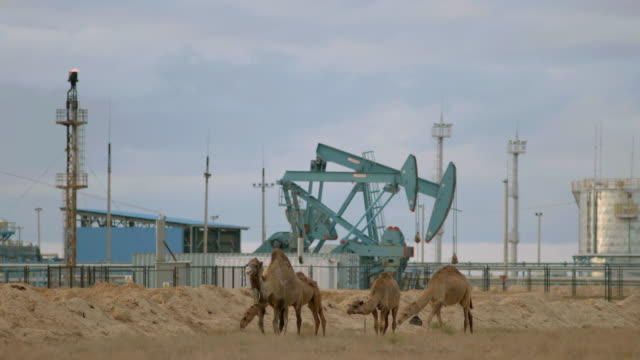 ws slo mo view of camels on sand with oil pumps / kazakhstan - kazakhstan stock videos & royalty-free footage