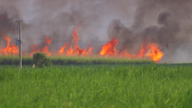 WS View of Cane field burning / Queensland, Australia