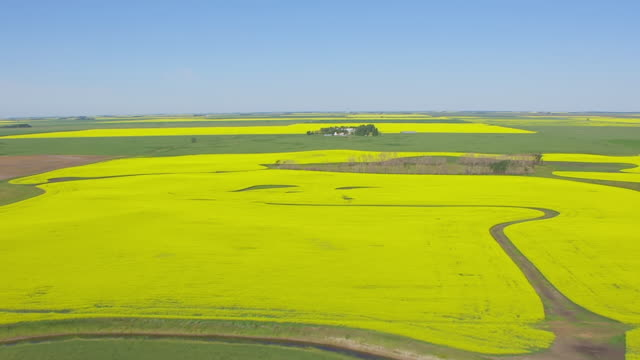 WS AERIAL View of Canola fields near Langdon / North Dakota, United States