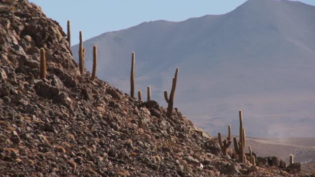ws view of cardon grande cactus, echinopsis species atacamensis in atacama desert / san pedro de atacama, norte grande, chile - san pedro de atacama stock videos & royalty-free footage