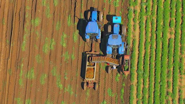 MS AERIAL TS ZI View of carrot harvesting / Adelaide, South Australia, Australia