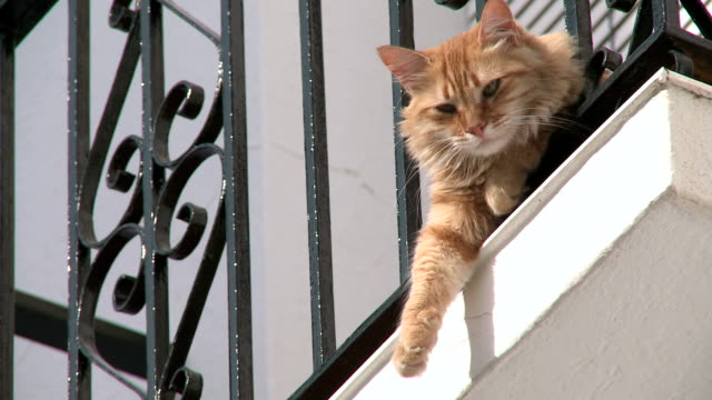 vídeos de stock, filmes e b-roll de cu view of cat sitting at railings in village mijas / costa del sol, andalusia, spain - bigode de animal